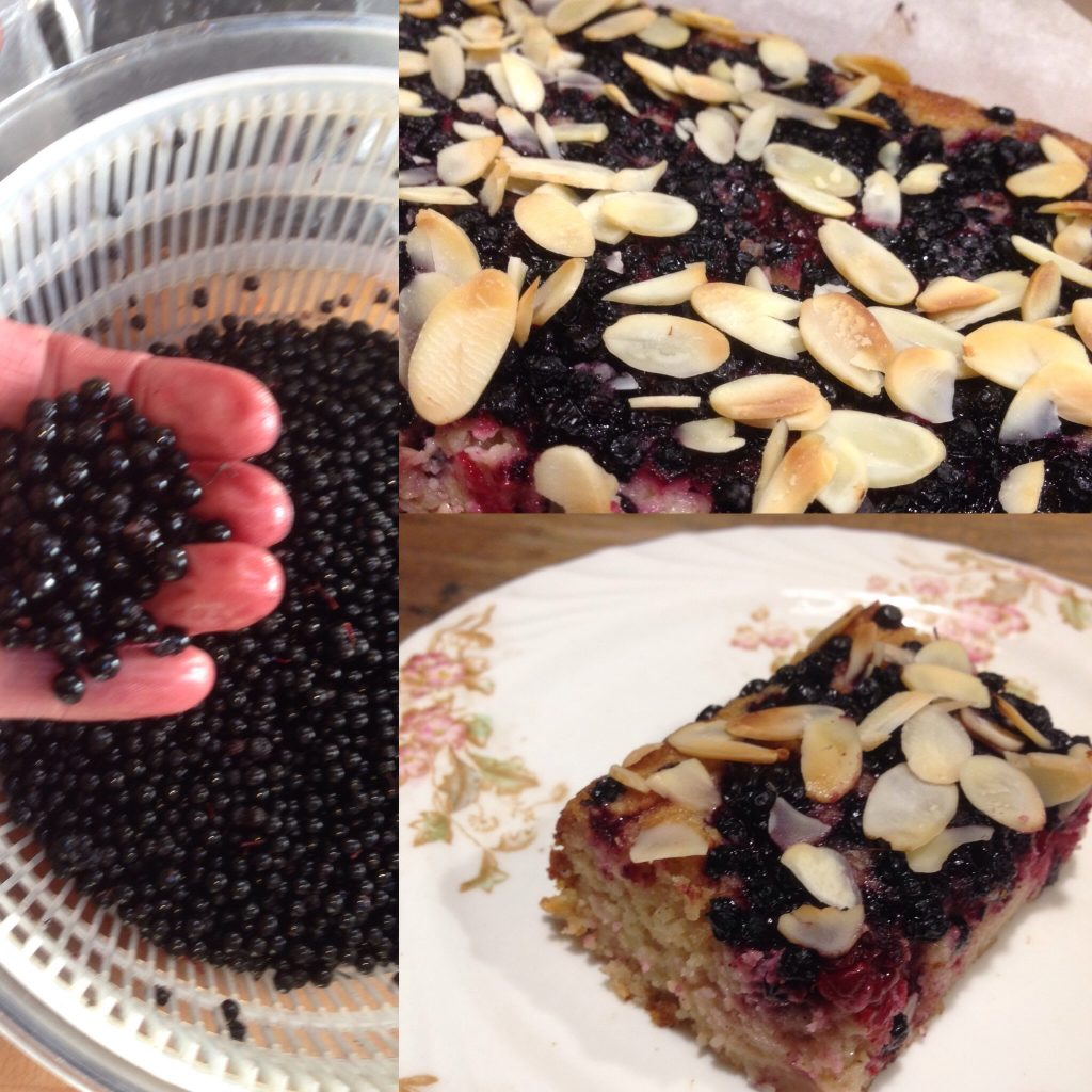 Blackberry and Elderberry Gluten-free Tray Bake