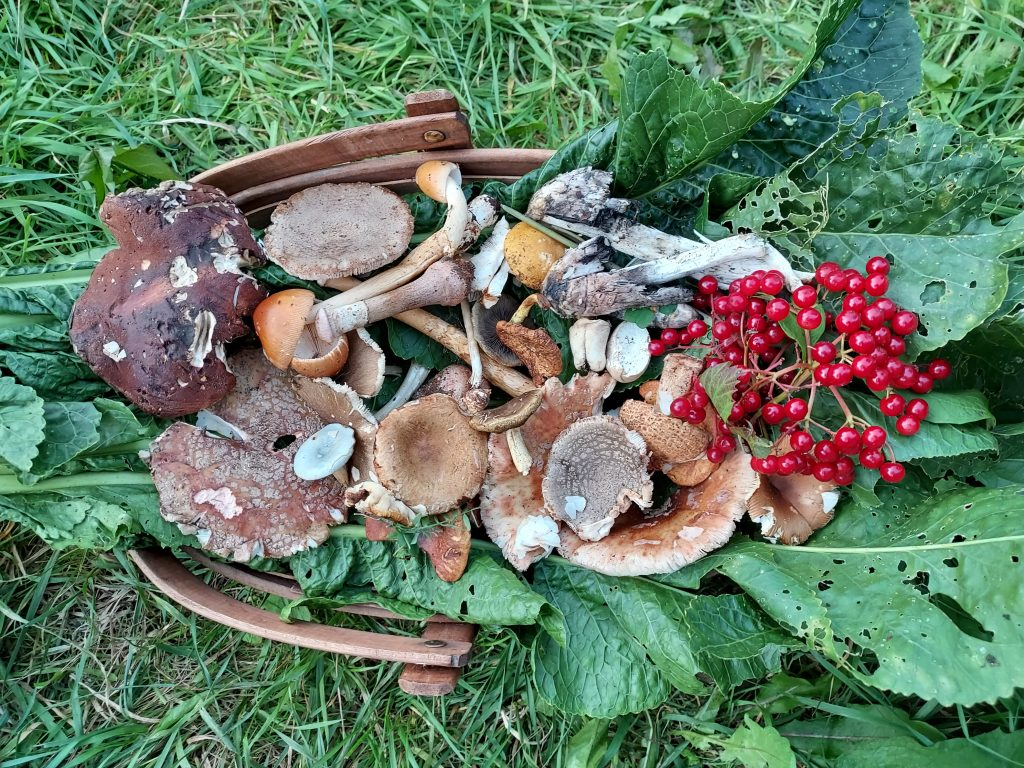 One Day Foraging – Fruits, flowers, foliage, roots & fungi